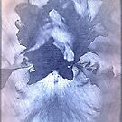Iris Abstract by Sherry Hallemeier