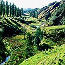 Forgotten World Highway NZ by kevin smith  skystudiohawaii