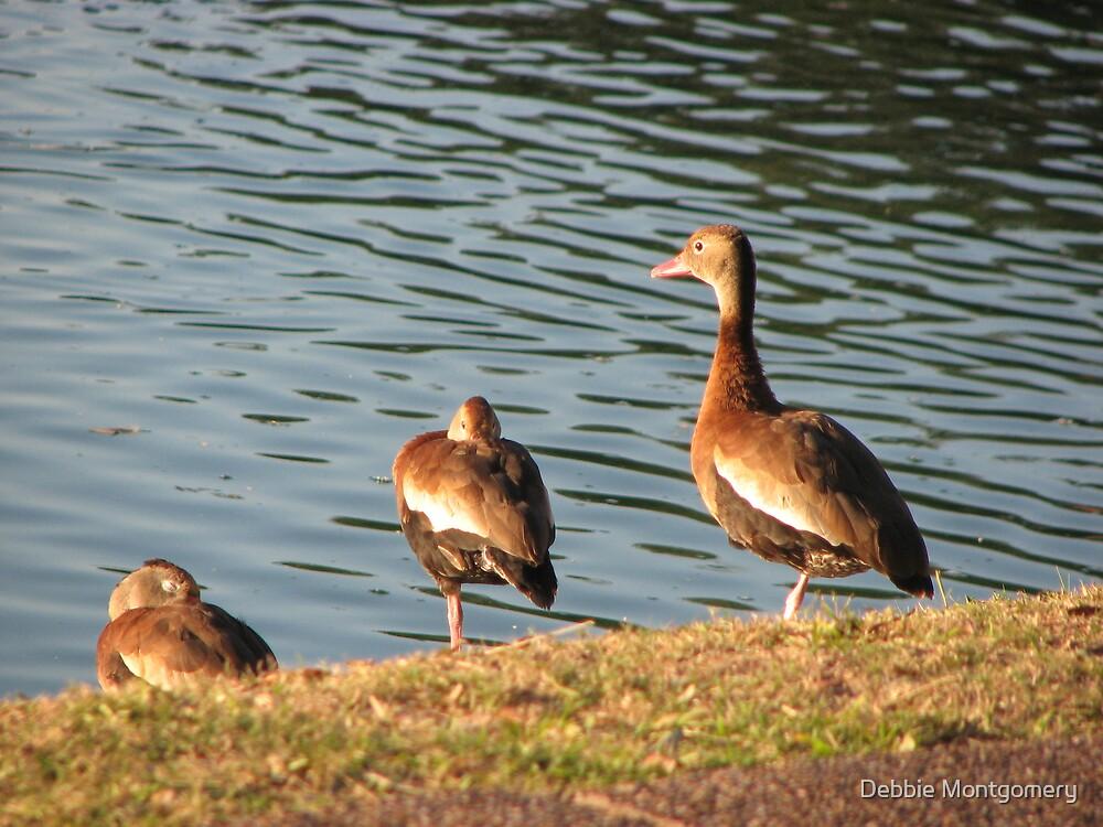 ducks in a row by Debbie Montgomery