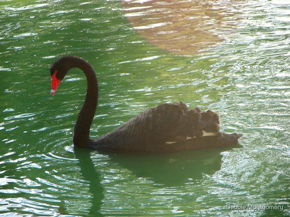 Swan  by Debbie Montgomery
