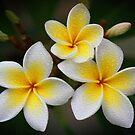 Frangipani Trio by Keith G. Hawley