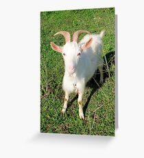 Billy The Kid Goat Greeting Card