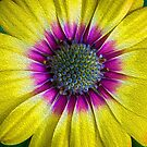 Abstract Daisy by Keith G. Hawley