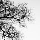 Bare Branches by EzekielR