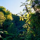 Punga Tree Ferns by kevin smith  skystudiohawaii