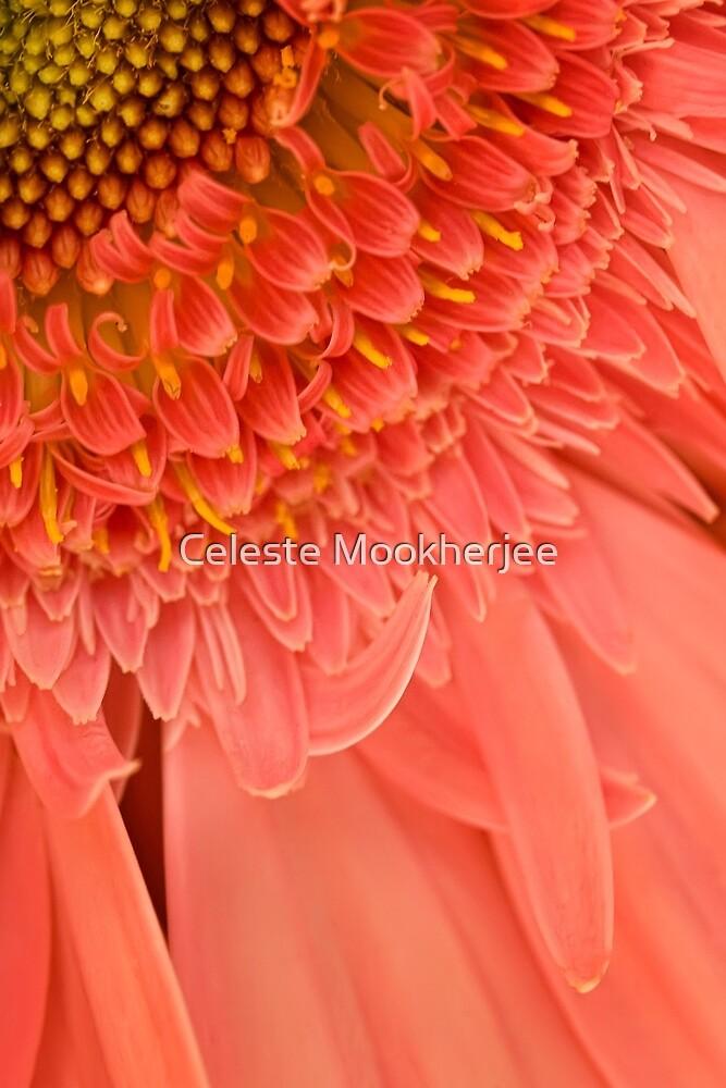 Just peachy by Celeste Mookherjee