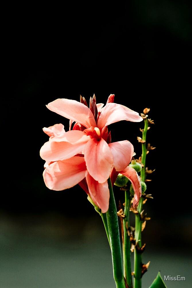 Flower by MissEm