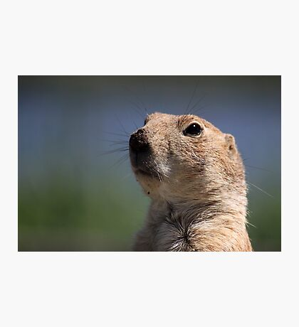 Portrait of a Prairie Dog Photographic Print