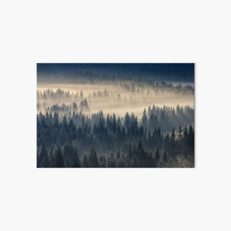 coniferous forest in foggy mountains Art Board Print