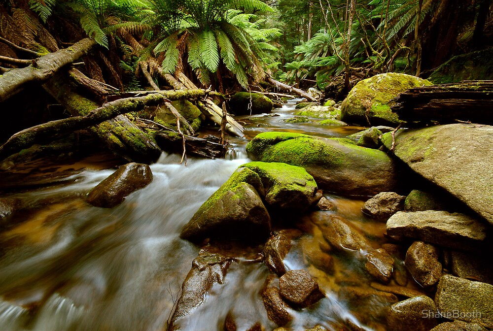 North Cascade Creek by ShaneBooth
