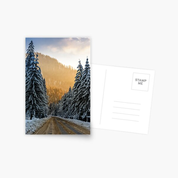snowy road through spruce forest at sunset Postcard