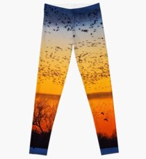 Swarm Setting – Sandhills over The Platte Leggings