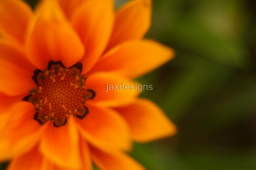 soft focus by Jacqueline Barreto