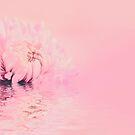 Romantic chrysanthemum flower soft pink pastel by artsandsoul