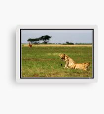 Targeted  Canvas Print