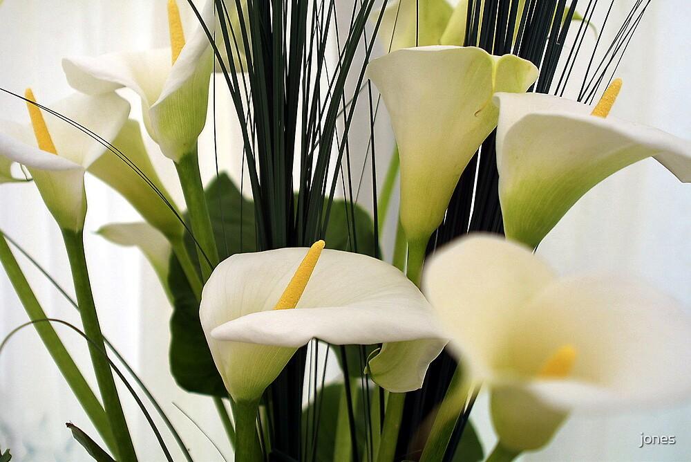 Arum Lilies by jones