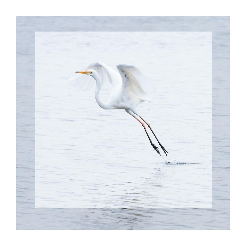 Bird in flight  by Kate Schofield