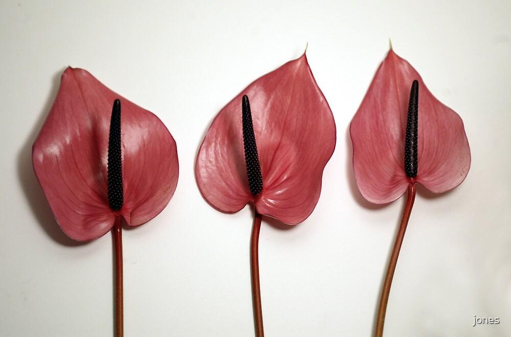 Three Red Flowers by jones