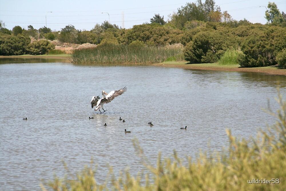 walk on water by wildrider58