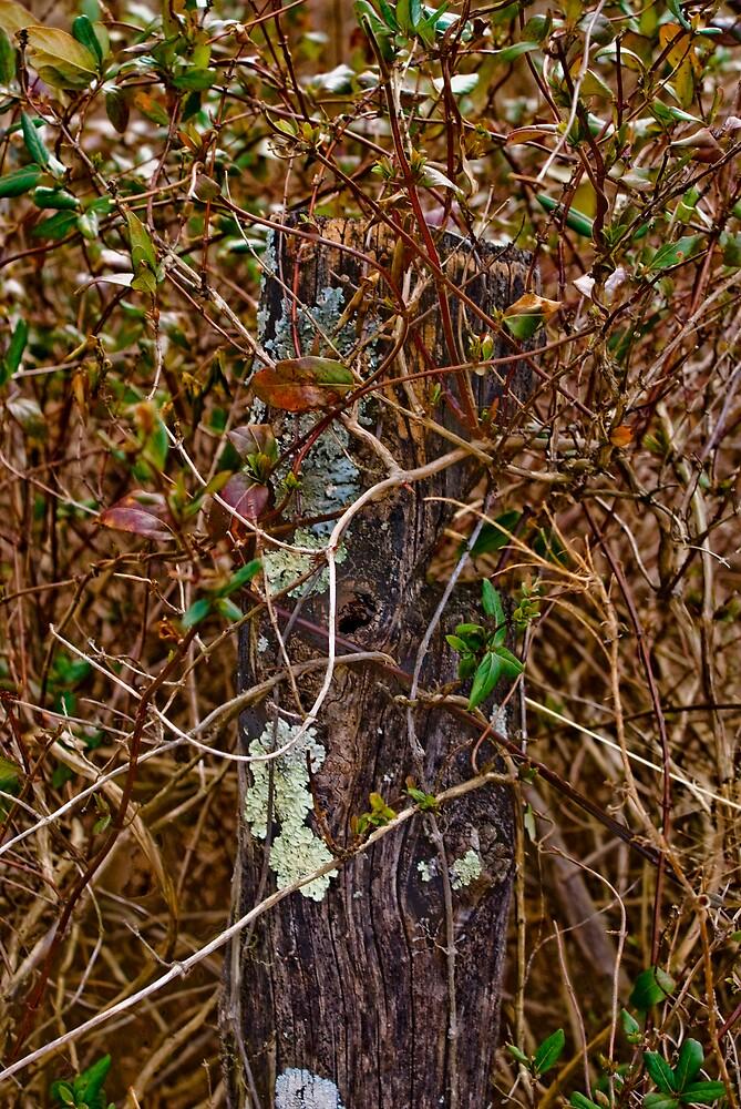 Hidden Post by Rod  Adams