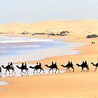 Camel Rides On the Beach by Lorraine Wilson