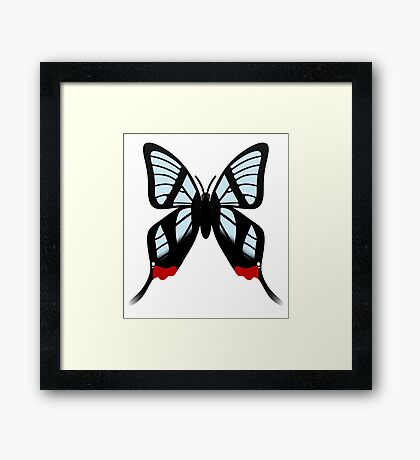 Glasswing Swallowtail Butterfly Framed Print