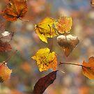 Leaves falling..... by Bine