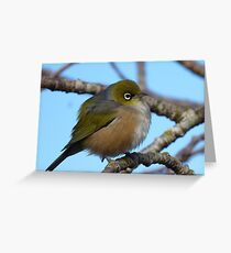 I'm sleepy! - Silvereye, Wax Eye - New Zealand Greeting Card
