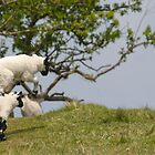 Jumping Spring Lambs  by M.S. Photography/Art