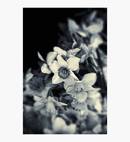 Narcissi II Photographic Print