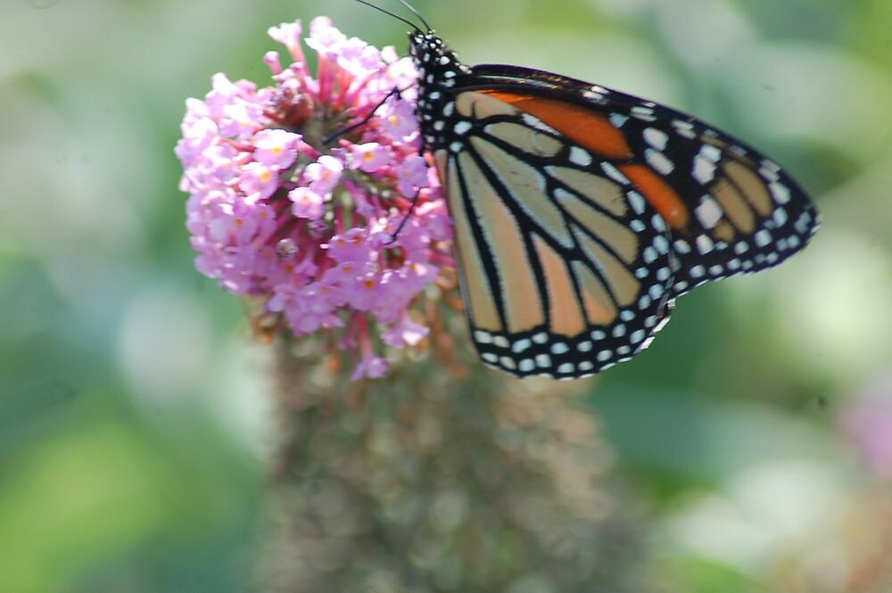 Butterfly by atmbroke