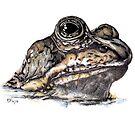 Frog or Toad? by KarenJI1962