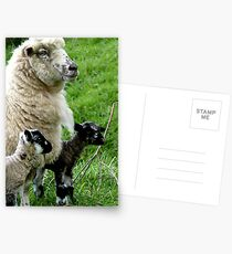 Proud Mum with Twins! - Sheep - NZ Southland Postcards