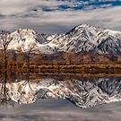 Sierra Reflections by Cat Connor