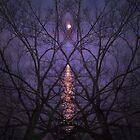 Purple Phantasm by RVogler