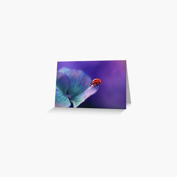 Ladybird....... Greeting Card