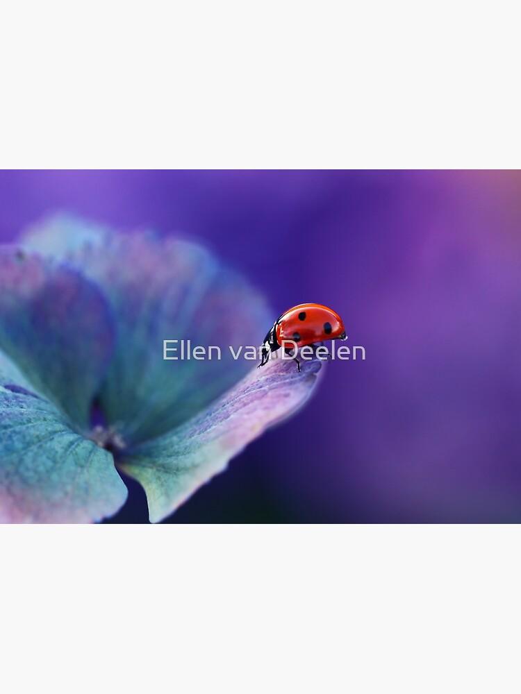 Ladybird....... by Ellen