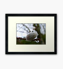 Reflections! - Fantail Pussywillow - New Zealand Framed Print