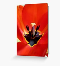 Red Center! - Red Tulip - NZ - Southland Greeting Card