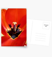Red Center! - Red Tulip - NZ - Southland Postcards