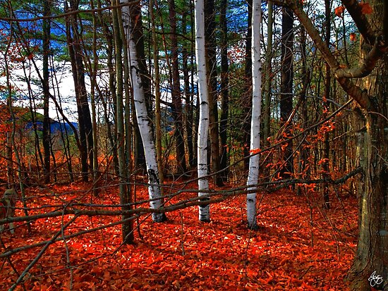 Birches in Red by Wayne King