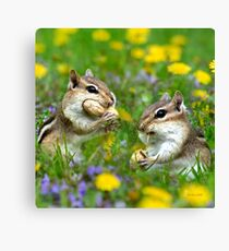Chipmunks Eating Peanuts Canvas Print