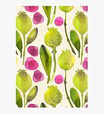 Poppy Garden Photographic Print