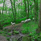 Evening Stroll, When Sheep Can't Sleep by Ann Hardcastle