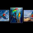The Beauty of Macaws by Brian Tarr