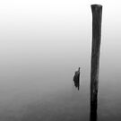 Old Piling Reflections 5 BW by marybedy