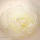 Creamy White Begonia by Yannik Hay