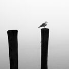 Piling and Gull BW by marybedy
