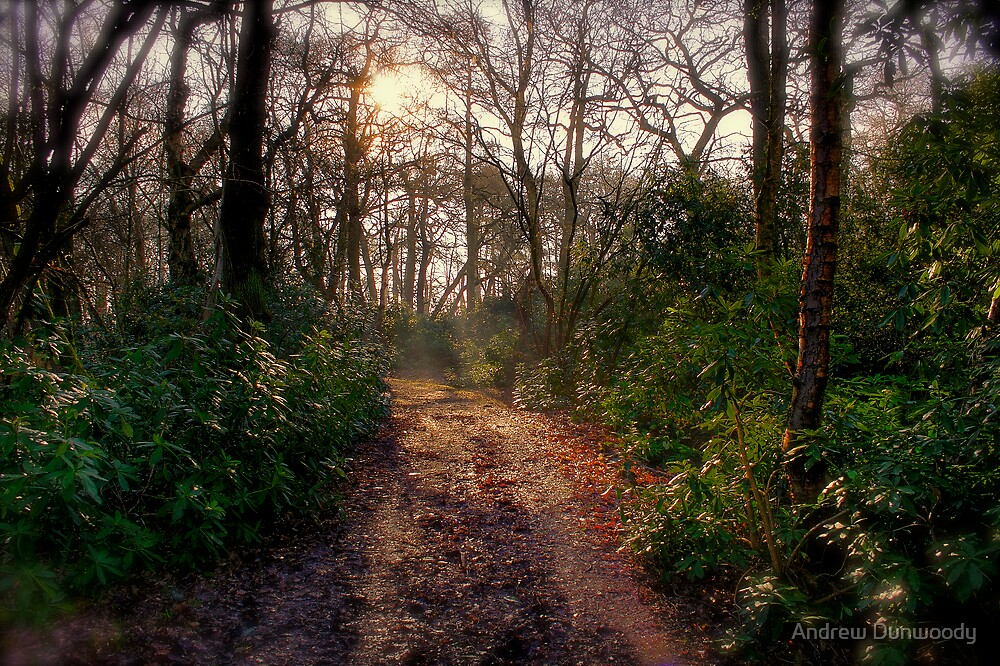 Forest Track by Andrew Dunwoody