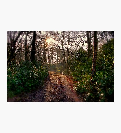 Forest Track Photographic Print